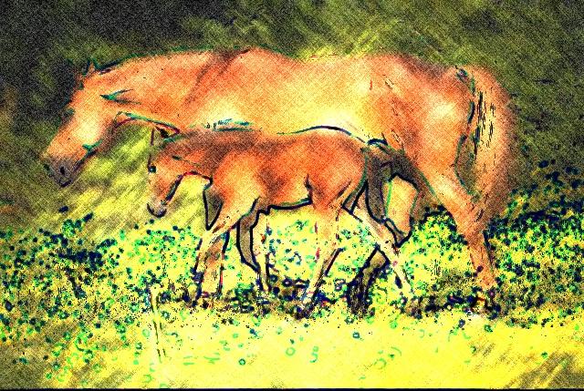 Farbstift: Dieser Effekt lässt das Foto aussehen wie eine Zeichnung mit Buntstiften.