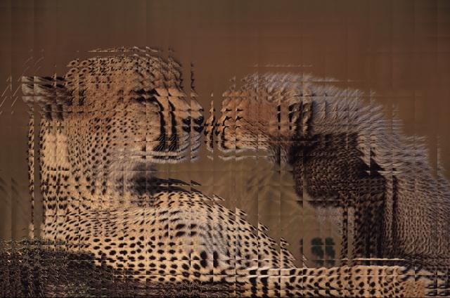 Glas: Dieser Effekt simuliert die Betrachtung des Fotos durch Glaskacheln.