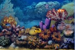 Nemo 3D als Bildschirmschoner: Ein Live-Aquarium mit jeder Mengenaturgetreuer Fische, darunter einem echten