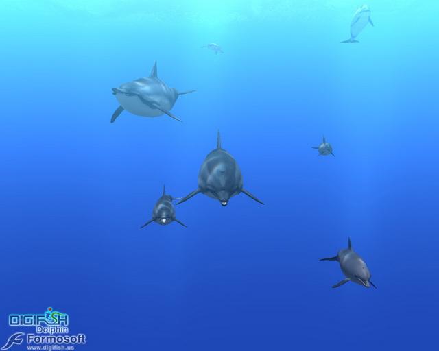 Lécran de veille 3D pour nager avec les dauphins