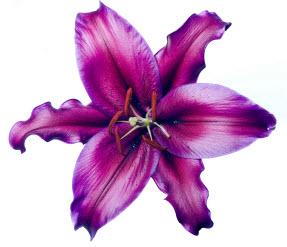 fleur_02