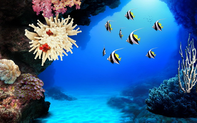 screen saver acquario per pc e per mac mobiletek blog