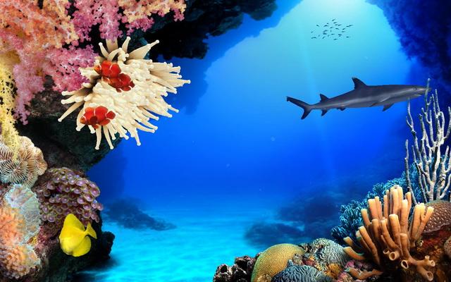 Una finestra sull'oceano - screen-saver