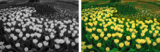 Bring your black & white photos to life by adding colour!